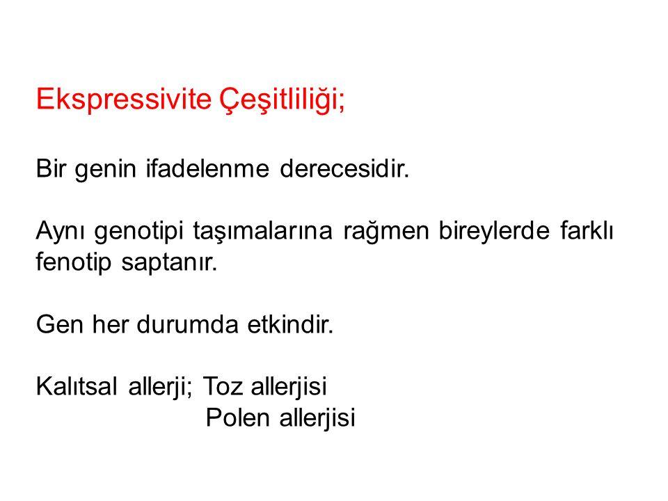 Ekspressivite Çeşitliliği;
