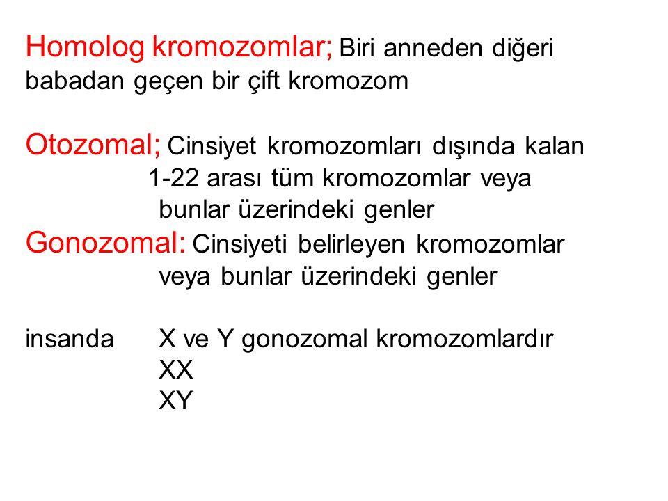 Otozomal; Cinsiyet kromozomları dışında kalan