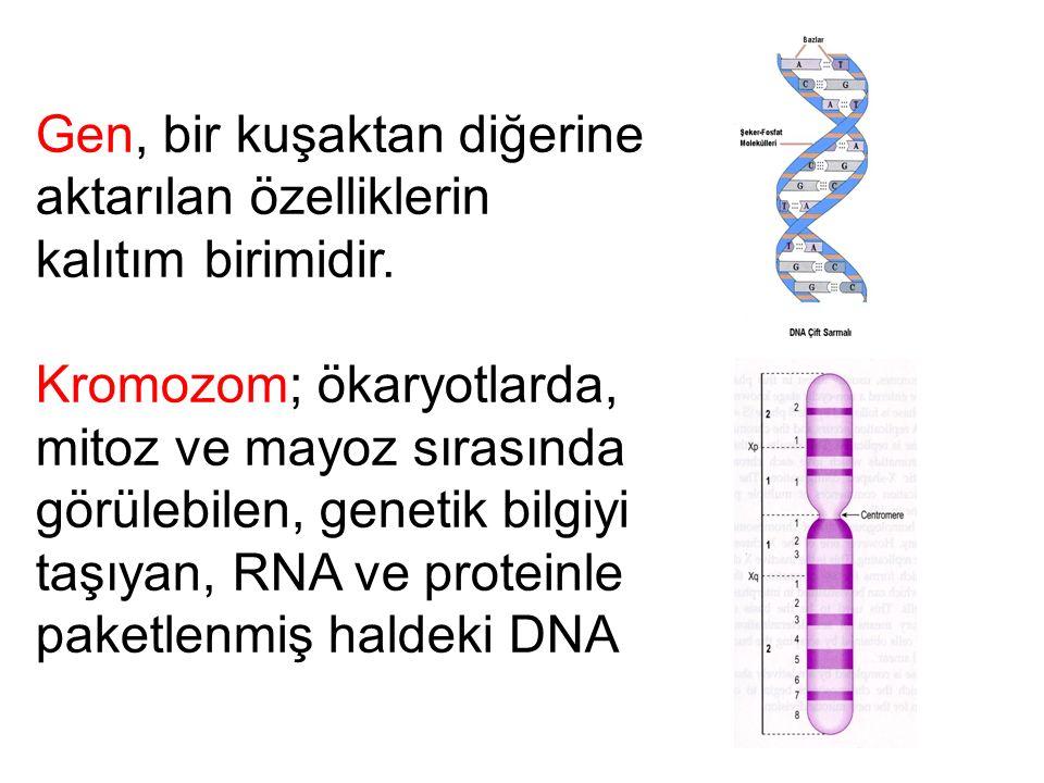 Gen, bir kuşaktan diğerine aktarılan özelliklerin kalıtım birimidir.