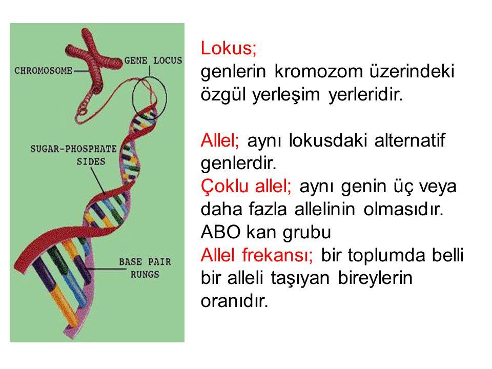 Lokus; genlerin kromozom üzerindeki. özgül yerleşim yerleridir. Allel; aynı lokusdaki alternatif.