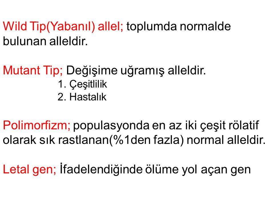 Wild Tip(Yabanıl) allel; toplumda normalde bulunan alleldir.