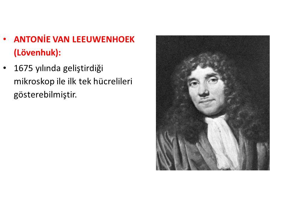ANTONİE VAN LEEUWENHOEK (Lövenhuk):