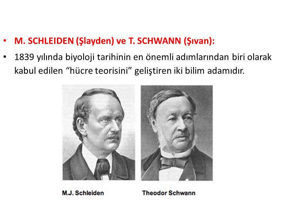 M. SCHLEIDEN (Şlayden) ve T. SCHWANN (Şıvan):