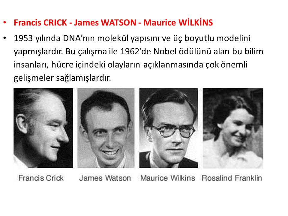 Francis CRICK - James WATSON - Maurice WİLKİNS