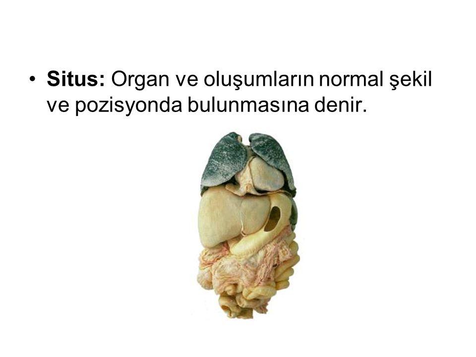 Situs: Organ ve oluşumların normal şekil ve pozisyonda bulunmasına denir.