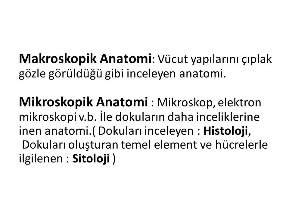 Makroskopik Anatomi: Vücut yapılarını çıplak gözle görüldüğü gibi inceleyen anatomi.