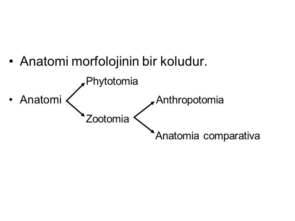 Anatomi morfolojinin bir koludur. Phytotomia Zootomia