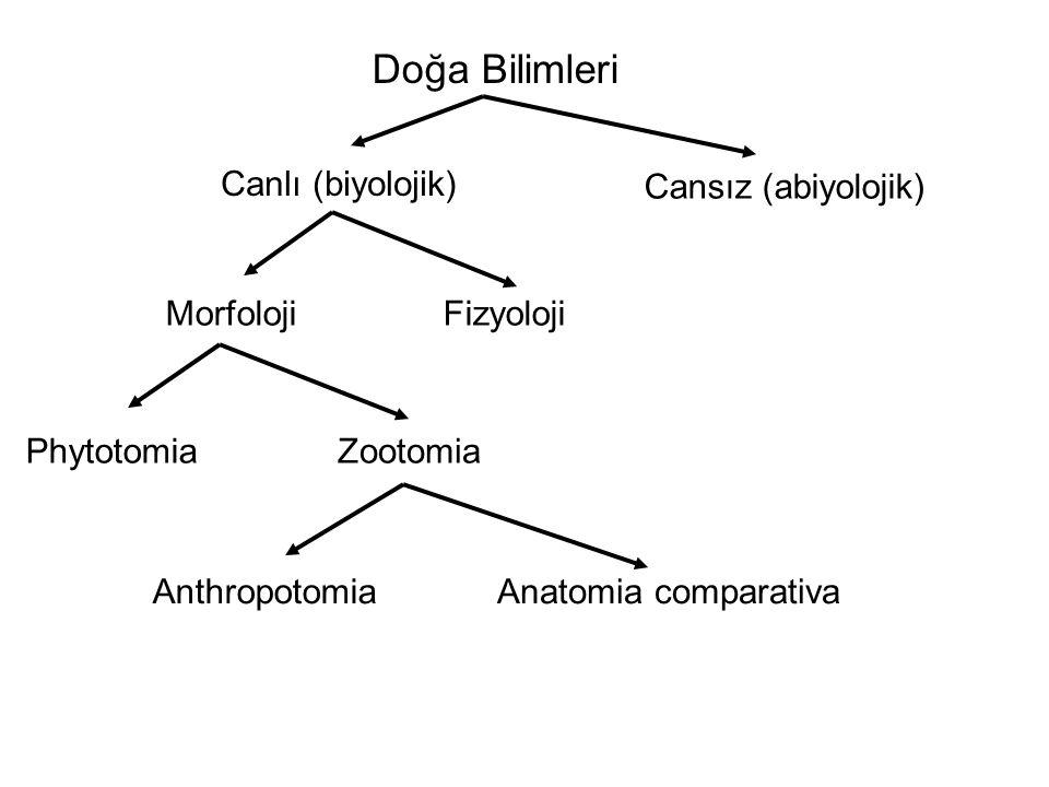 Doğa Bilimleri Canlı (biyolojik) Cansız (abiyolojik) Morfoloji