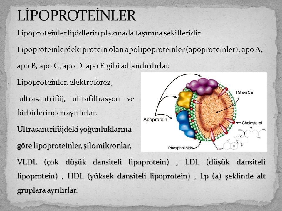 LİPOPROTEİNLER