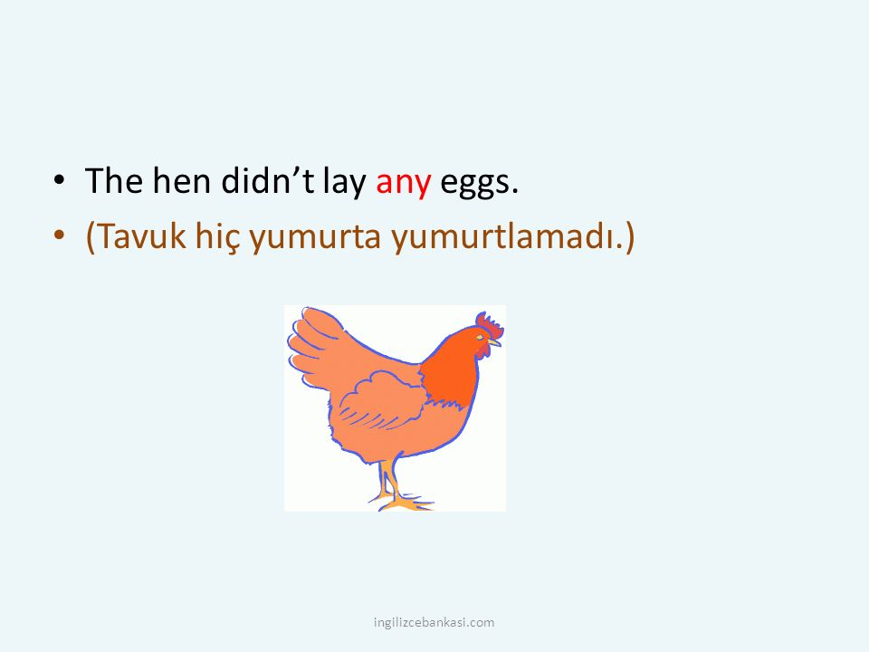 The hen didn't lay any eggs. (Tavuk hiç yumurta yumurtlamadı.)
