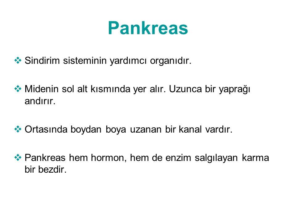 Pankreas Sindirim sisteminin yardımcı organıdır.