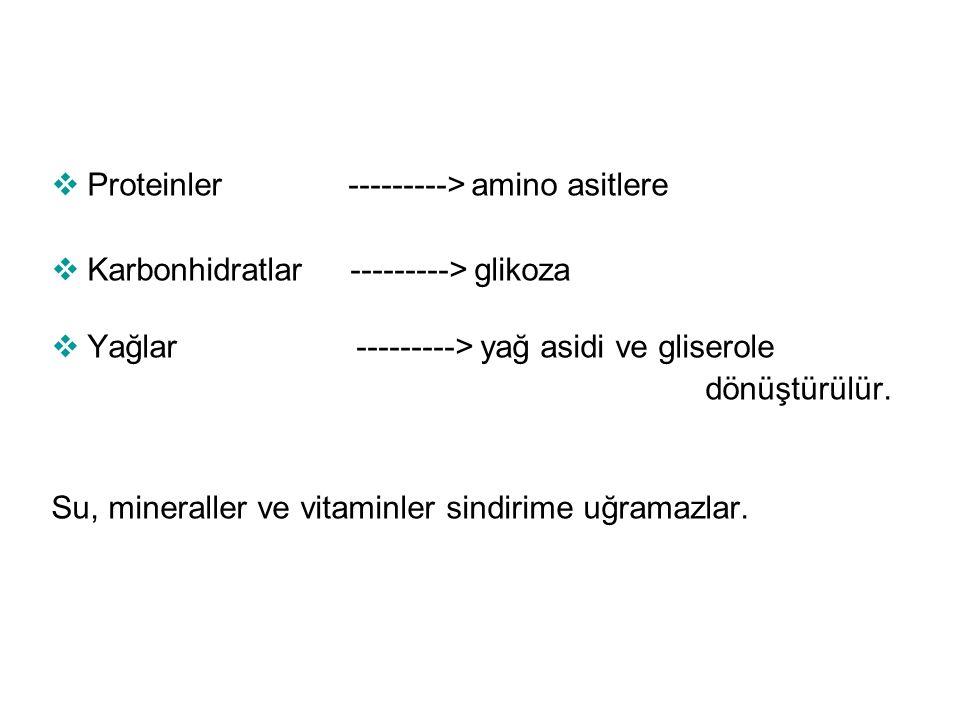 Proteinler ---------> amino asitlere