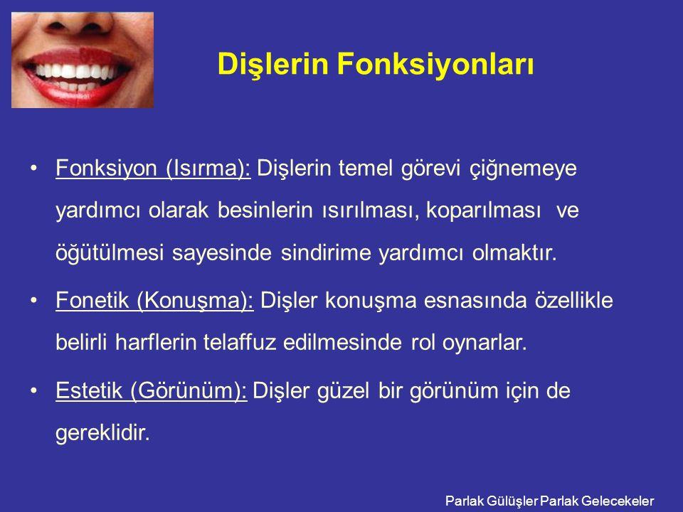 Dişlerin Fonksiyonları