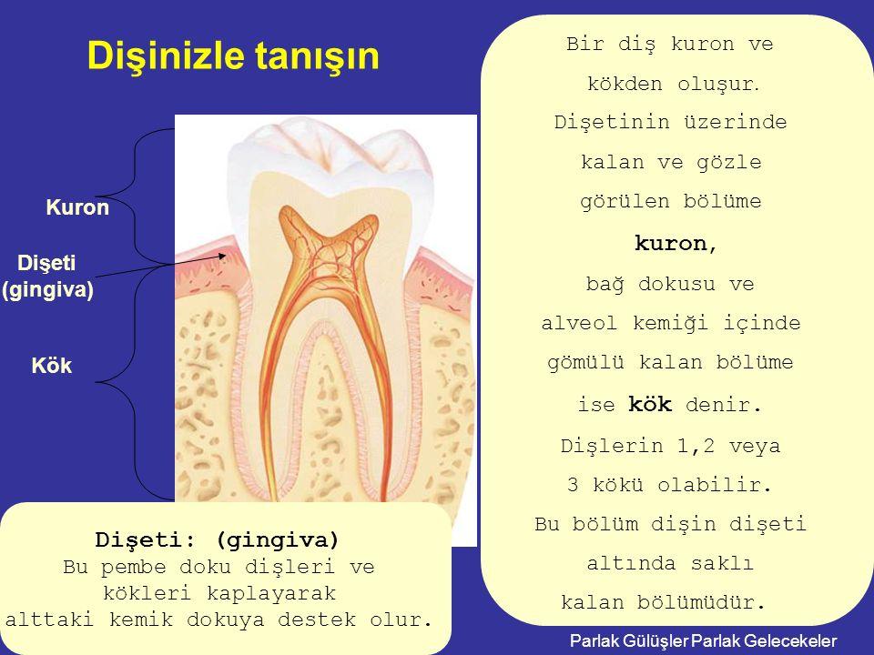 Dişinizle tanışın kuron, Dişeti: (gingiva) Bir diş kuron ve