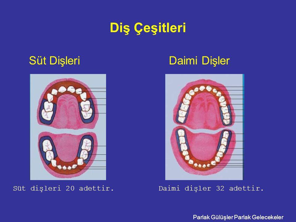Diş Çeşitleri Süt Dişleri Daimi Dişler Süt dişleri 20 adettir.