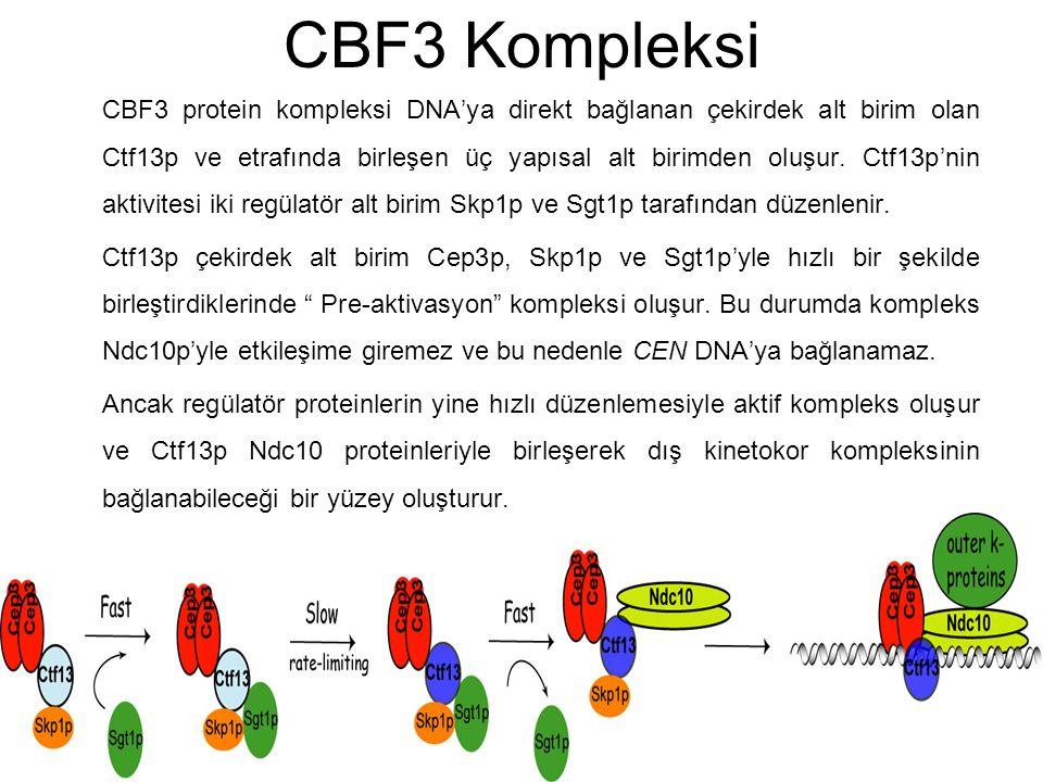CBF3 Kompleksi
