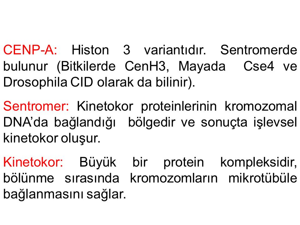 CENP-A: Histon 3 variantıdır