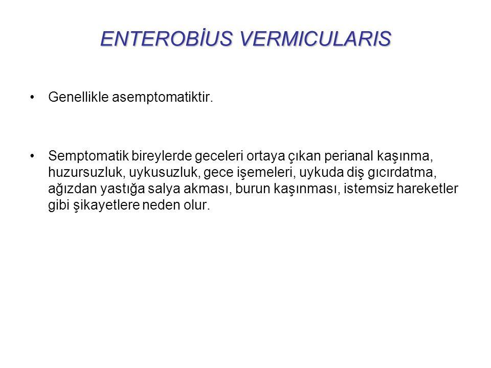 ENTEROBİUS VERMICULARIS