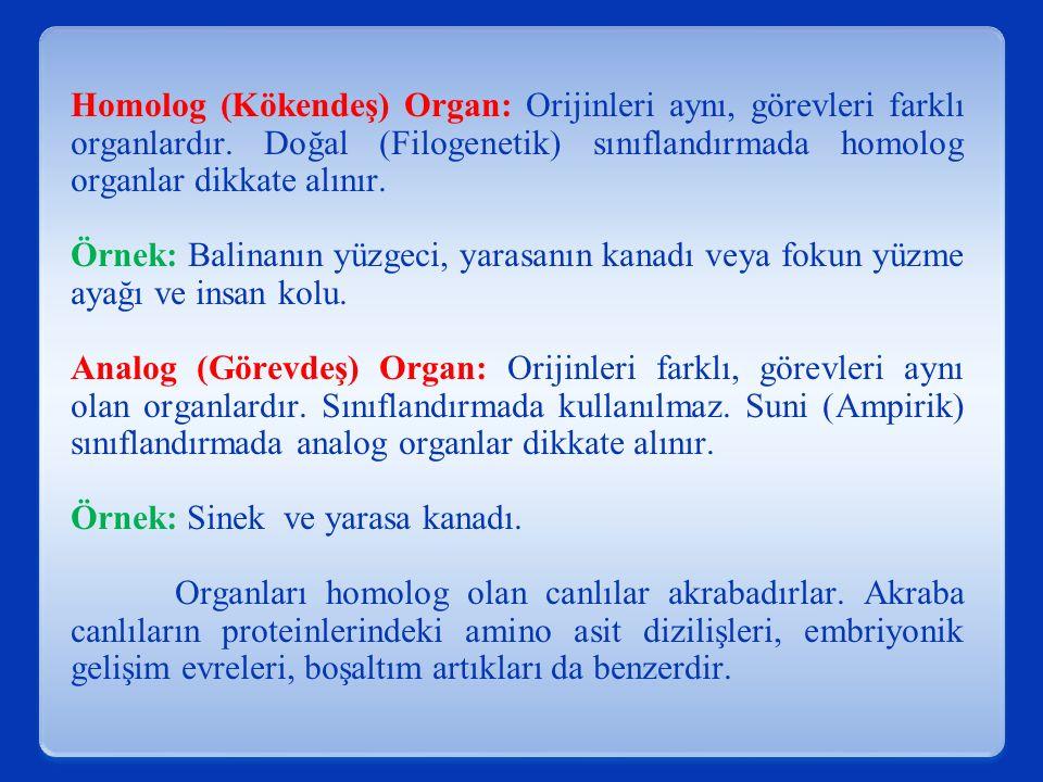 Homolog (Kökendeş) Organ: Orijinleri aynı, görevleri farklı organlardır.