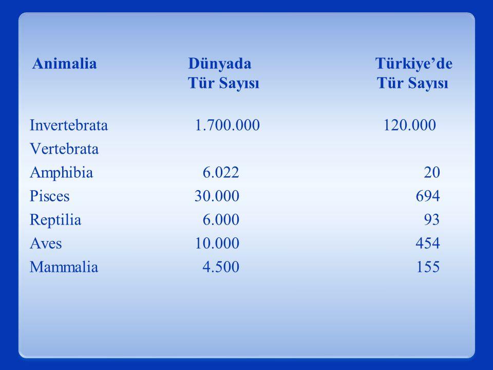 Animalia Dünyada Türkiye'de