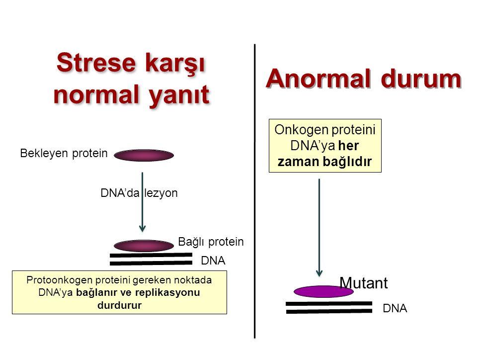 Strese karşı normal yanıt