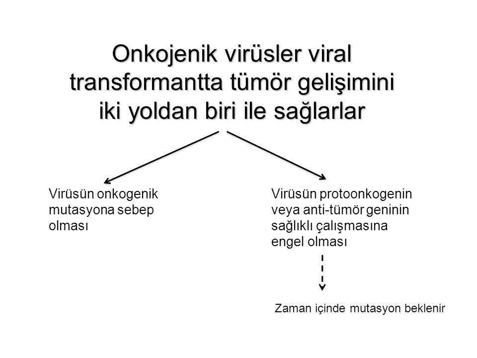 Onkojenik virüsler viral transformantta tümör gelişimini iki yoldan biri ile sağlarlar