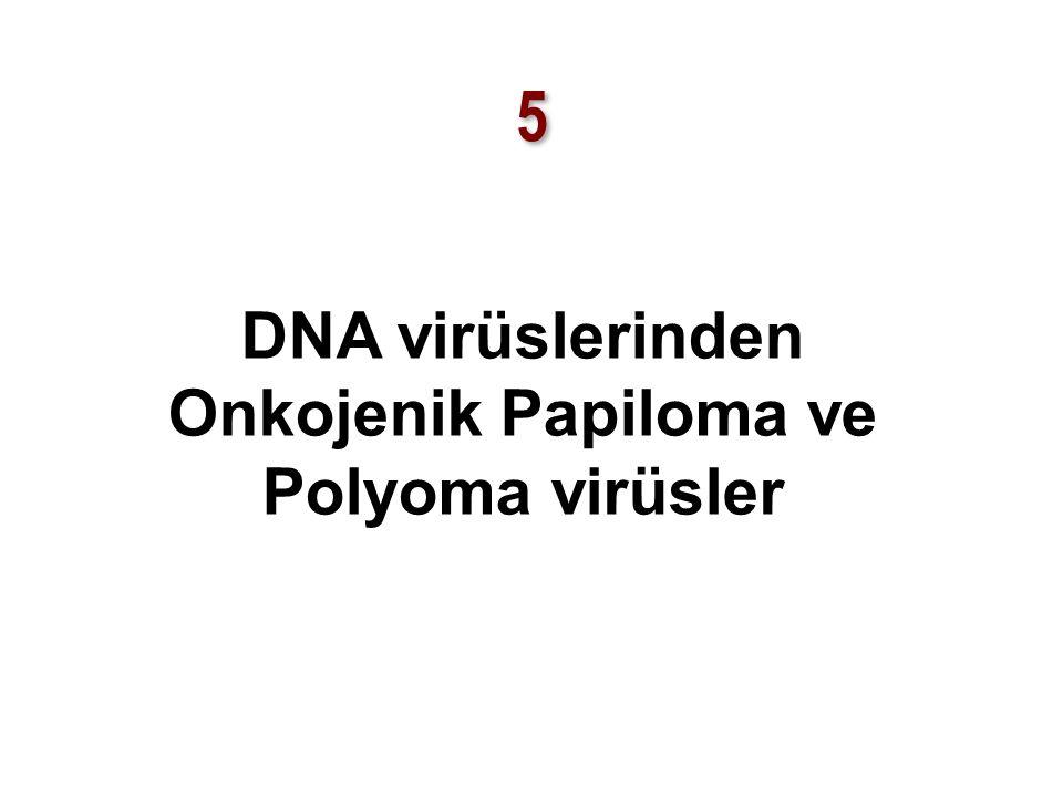 DNA virüslerinden Onkojenik Papiloma ve Polyoma virüsler