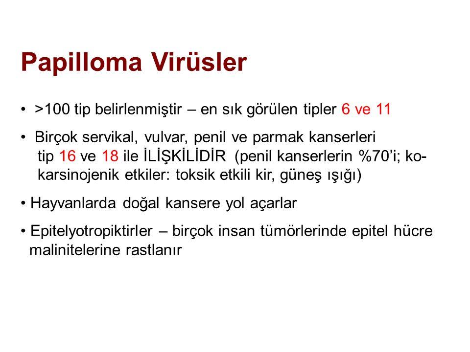 Papilloma Virüsler >100 tip belirlenmiştir – en sık görülen tipler 6 ve 11. Birçok servikal, vulvar, penil ve parmak kanserleri.