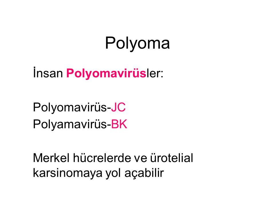 Polyoma İnsan Polyomavirüsler: Polyomavirüs-JC Polyamavirüs-BK