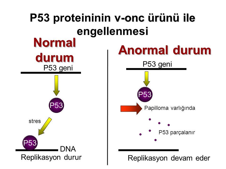 P53 proteininin v-onc ürünü ile engellenmesi