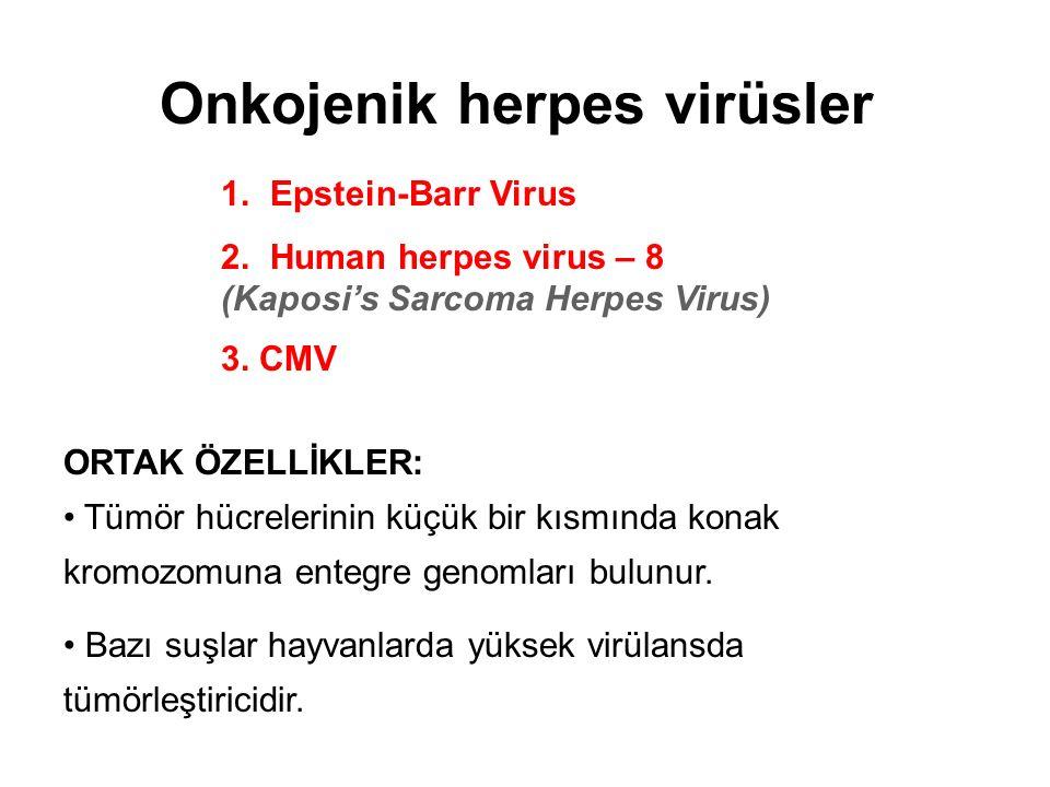 Onkojenik herpes virüsler