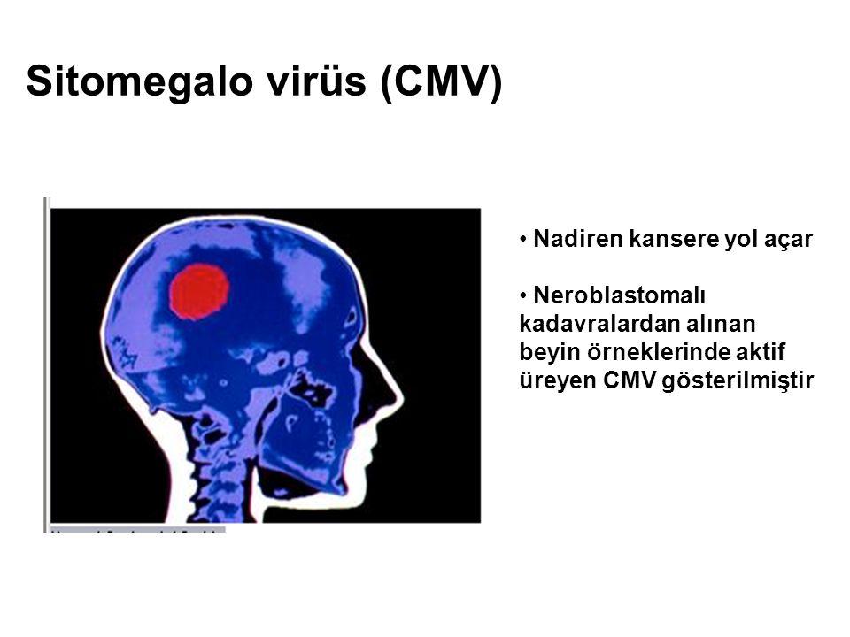 Sitomegalo virüs (CMV)