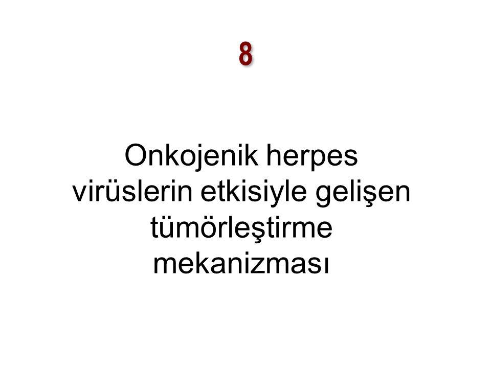 8 Onkojenik herpes virüslerin etkisiyle gelişen tümörleştirme mekanizması