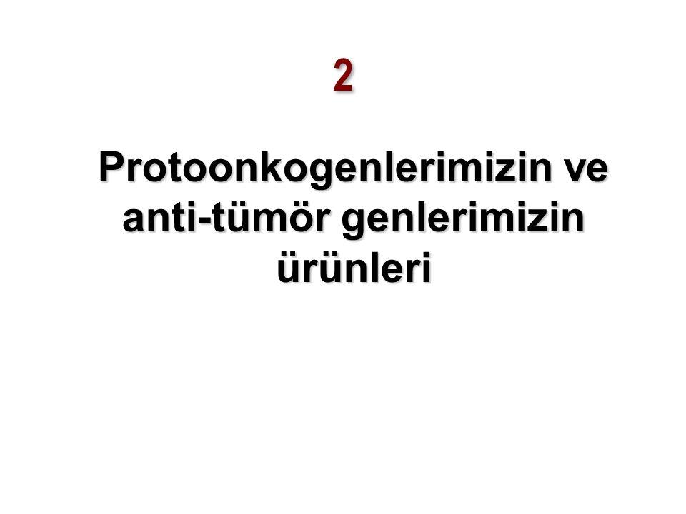 Protoonkogenlerimizin ve anti-tümör genlerimizin ürünleri
