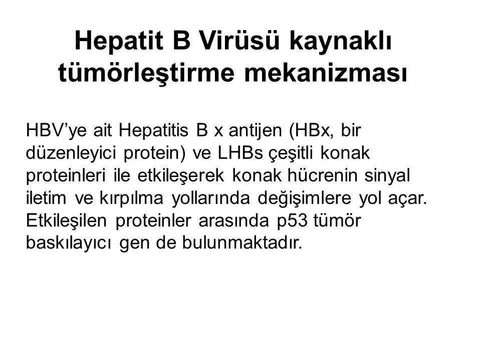 Hepatit B Virüsü kaynaklı tümörleştirme mekanizması