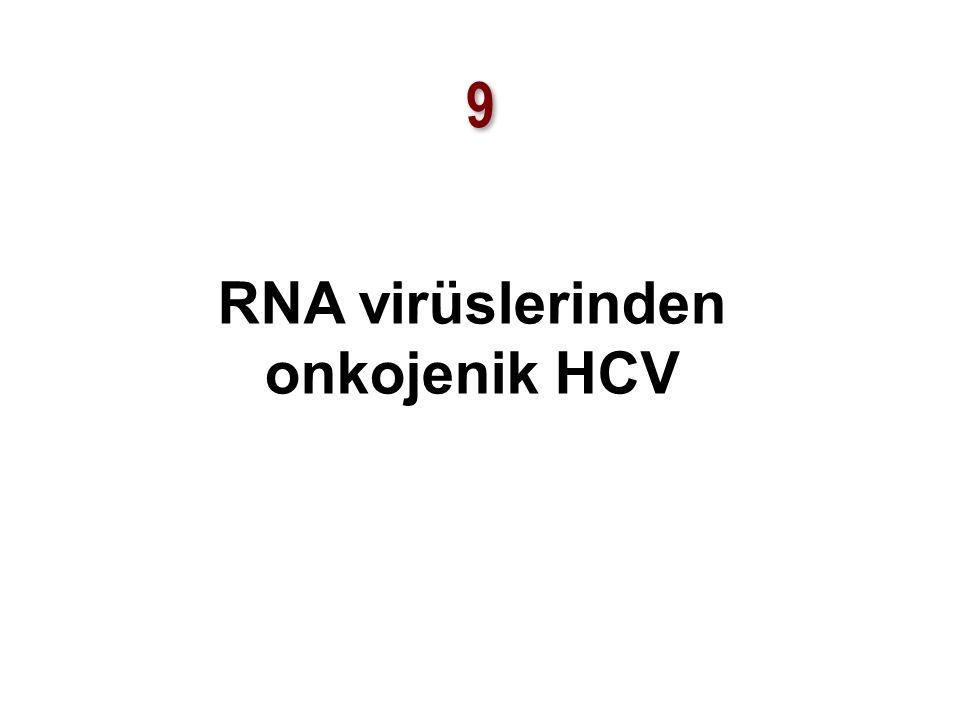 RNA virüslerinden onkojenik HCV