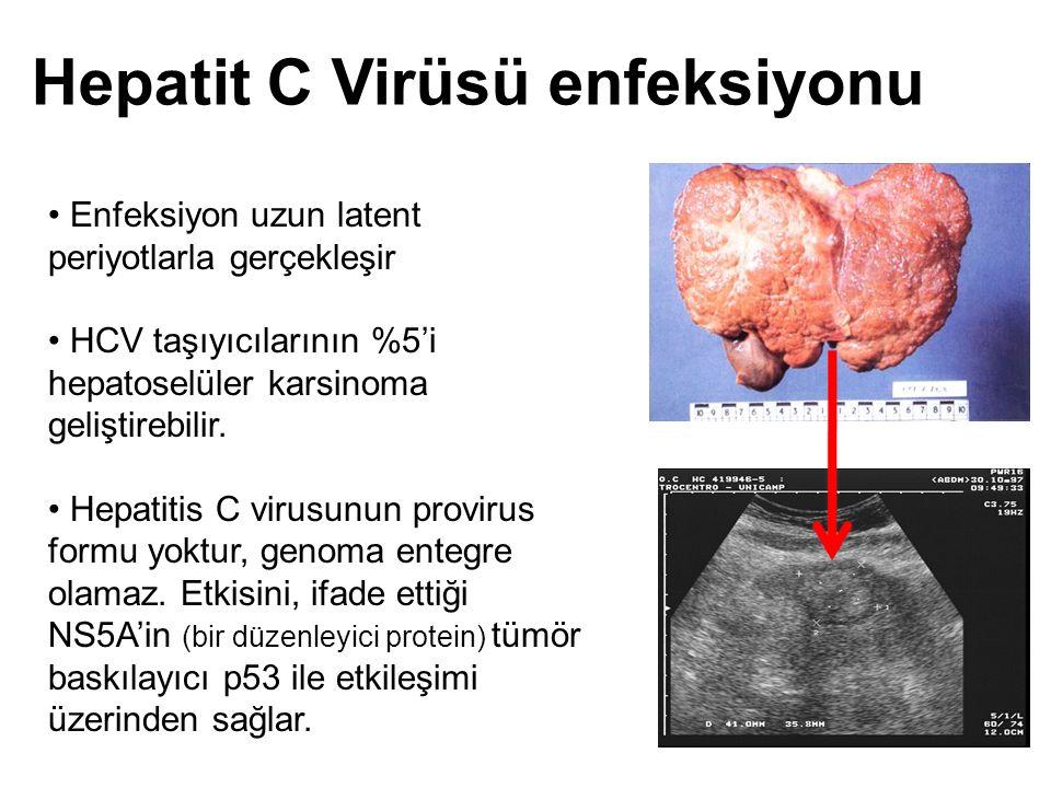 Hepatit C Virüsü enfeksiyonu