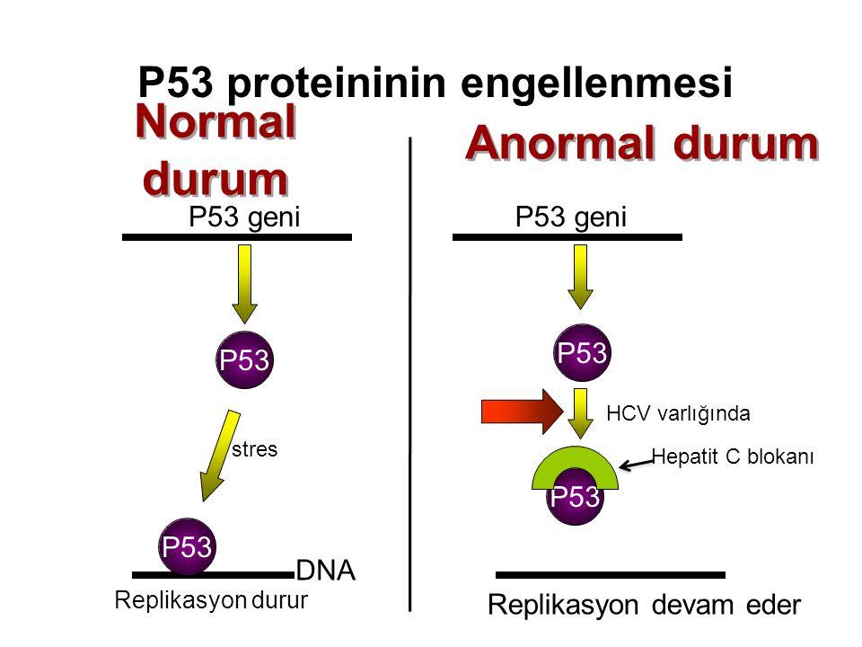 P53 proteininin engellenmesi