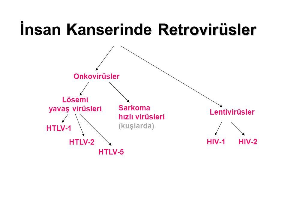 İnsan Kanserinde Retrovirüsler