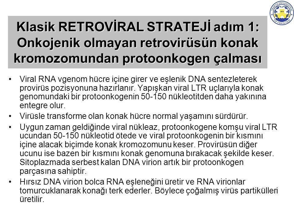 Klasik RETROVİRAL STRATEJİ adım 1: Onkojenik olmayan retrovirüsün konak kromozomundan protoonkogen çalması