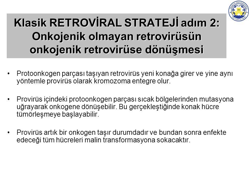 Klasik RETROVİRAL STRATEJİ adım 2: Onkojenik olmayan retrovirüsün onkojenik retrovirüse dönüşmesi