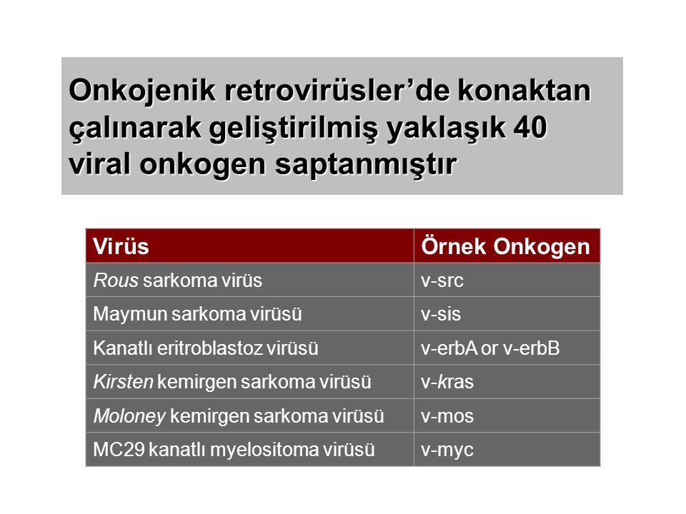 Onkojenik retrovirüsler'de konaktan çalınarak geliştirilmiş yaklaşık 40 viral onkogen saptanmıştır