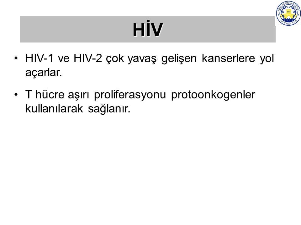 HİV HIV-1 ve HIV-2 çok yavaş gelişen kanserlere yol açarlar.