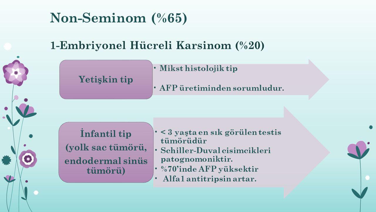 1-Embriyonel Hücreli Karsinom (%20)