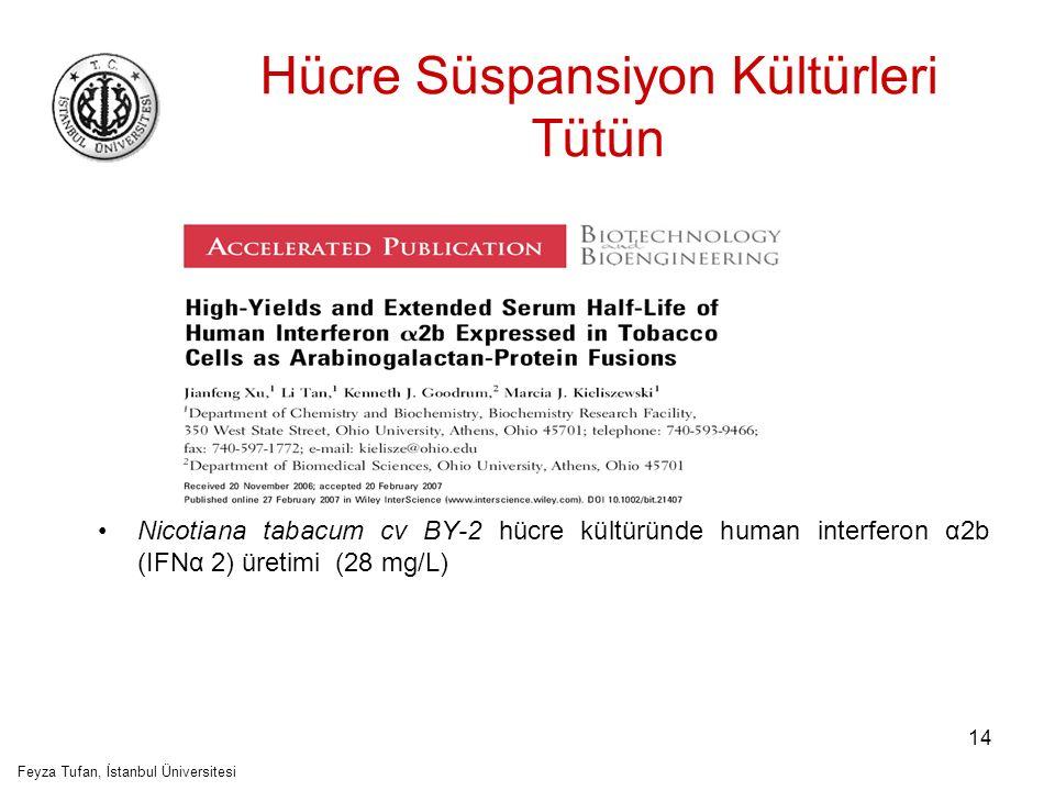 Hücre Süspansiyon Kültürleri Tütün