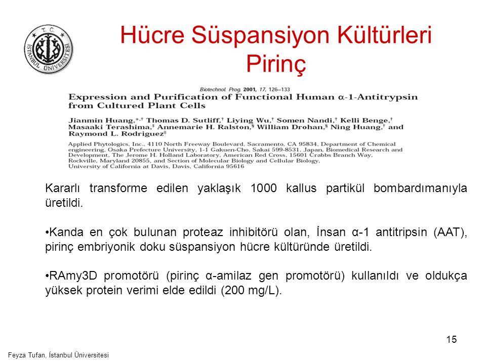 Hücre Süspansiyon Kültürleri Pirinç