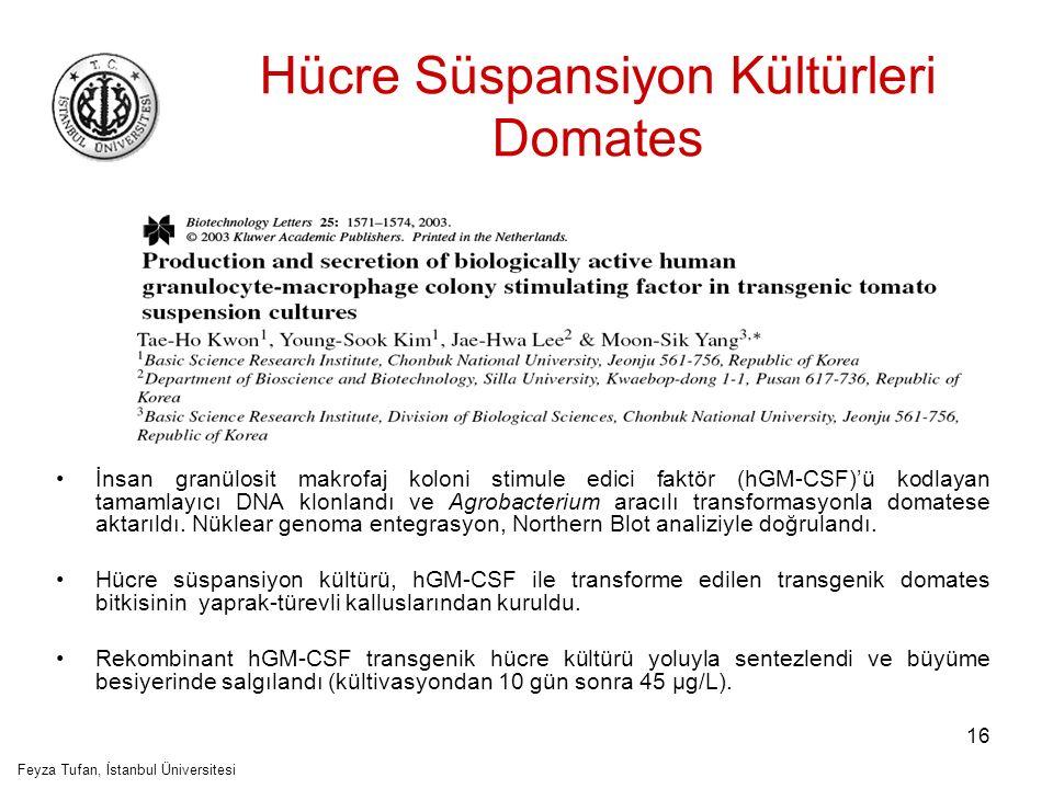 Hücre Süspansiyon Kültürleri Domates