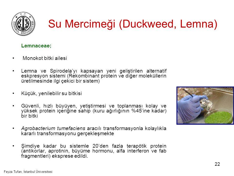 Su Mercimeği (Duckweed, Lemna)