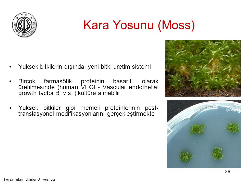 Feyza Tufan, İstanbul Üniversitesi