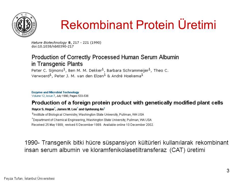 Rekombinant Protein Üretimi